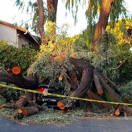 Name:  Parking lot damage. Goleta. California..jpg Views: 292 Size:  134.1 KB